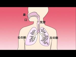 6_1_karada_no_tsukuri_to_hataraki